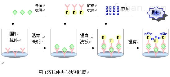 人白血病抑制因子elisa检测试剂盒说明书