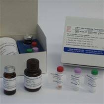 PCR快速检测试剂盒